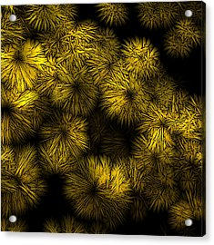 Shattered Daisy 6 Acrylic Print by Patricia Keith