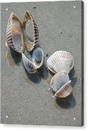 She Sells Sea Shells Acrylic Print by Suzanne Gaff
