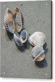 She Sells Sea Shells Acrylic Print