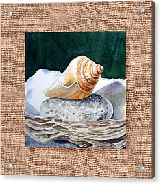 She Sells Seashells Decorative Design Acrylic Print