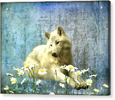 She Wolf Acrylic Print by Sharon Lisa Clarke