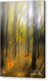 Shed Leaves Acrylic Print by Veikko Suikkanen