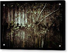 Shed Of Memories Acrylic Print by Darryl Gibbs