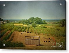 Acrylic Print featuring the photograph Sheep Among The Vineyards by Maria Janicki
