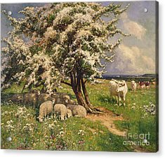 Sheep And Cattle In A Landscape Acrylic Print