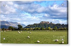 Sheep And Stirling Castle Acrylic Print by Jane Rix