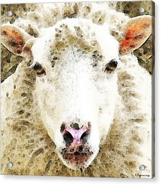 Sheep Art - White Sheep Acrylic Print by Sharon Cummings