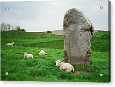 Sheep At Avebury Stones - Original Acrylic Print