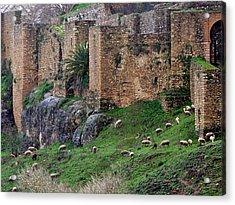 Sheep Cliff Acrylic Print