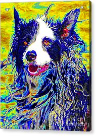 Sheep Dog 20130125v1 Acrylic Print by Wingsdomain Art and Photography