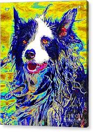 Sheep Dog 20130125v1 Acrylic Print by Wingsdomain Art and Photography