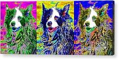 Sheep Dog Three 20130125 Acrylic Print by Wingsdomain Art and Photography