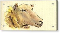 Sheep Head Study Acrylic Print by Juan  Bosco
