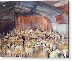Sheep Herding Acrylic Print by Lynne Bolwell
