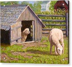 Sheep House Acrylic Print by Joe Bergholm