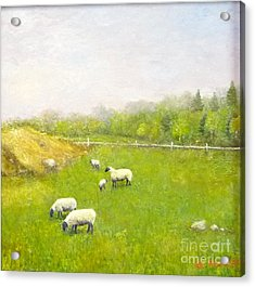 Sheep In Pasture Acrylic Print
