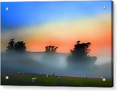 Sheep In The Early Morning Fog Acrylic Print by Wernher Krutein