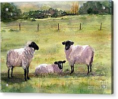 Sheep In The Meadow Acrylic Print