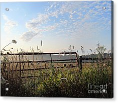 Sheep In The Meadow Acrylic Print by Tina M Wenger