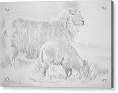 Sheep Lamb Pencil Drawing Acrylic Print