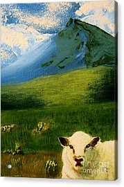 Sheep Looking In Acrylic Print