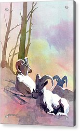 Sheep Shape Acrylic Print by Kris Parins