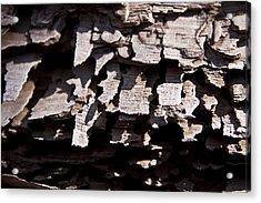Sheets Of Bark Acrylic Print