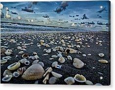 Shell Beach Acrylic Print