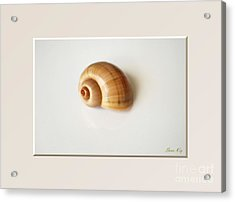 Shell. Delicate Colors Acrylic Print