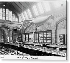 Shell Gallery Acrylic Print by Natural History Museum, London/science Photo Library