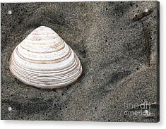 Shell In The Sand Acrylic Print by John Rizzuto