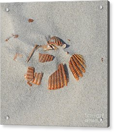 Shell Jigsaw Acrylic Print by Meandering Photography