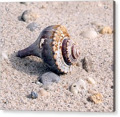 Acrylic Print featuring the photograph Shell by Karen Silvestri