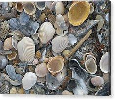 Shell Mosaic Acrylic Print