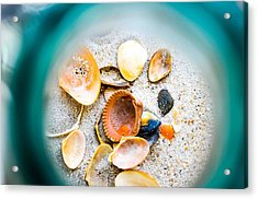 Shell Paradise  Acrylic Print