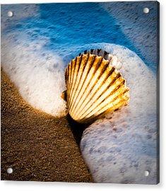 Shell Series No. 2 Acrylic Print by John Pagliuca