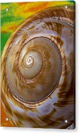 Shell Spiral Acrylic Print by Garry Gay