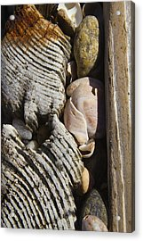 Shell Work  Acrylic Print by Eugene Bergeron
