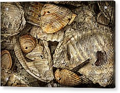Shelling It Out Acrylic Print by Davina Washington