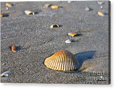 Acrylic Print featuring the photograph Shells 01 by Melissa Sherbon