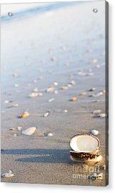 Acrylic Print featuring the photograph Shells 02 by Melissa Sherbon