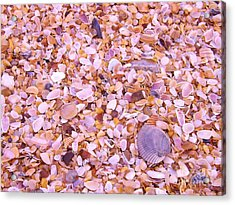 Acrylic Print featuring the photograph Shells A Million by Brigitte Emme