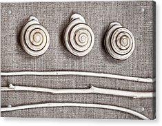 Shells And Sticks Acrylic Print by Carol Leigh