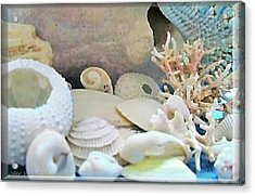 Shells In Pastels Acrylic Print by Danielle  Parent
