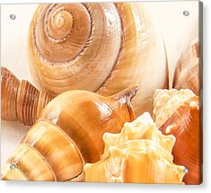 Shells Acrylic Print by Jean Noren