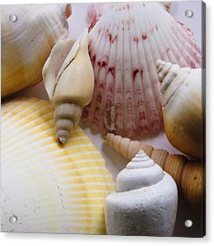 Acrylic Print featuring the photograph Shells by Kevin Bergen