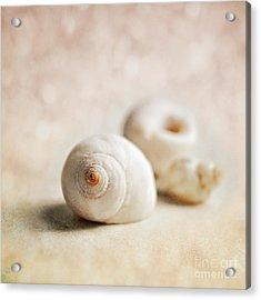Shells Acrylic Print by Lyn Randle