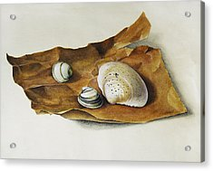 Shells On Paper Acrylic Print by Horst Braun