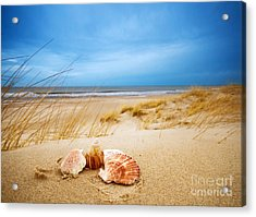 Shells On Sand Acrylic Print by Michal Bednarek