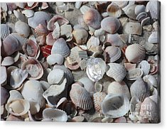 Shells On Treasure Island Acrylic Print by Carol Groenen